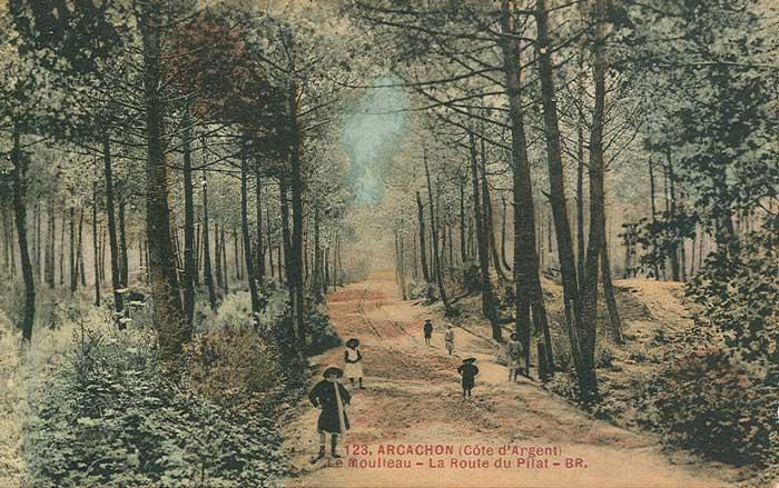 Excursion for t - Les pins du moulleau ...
